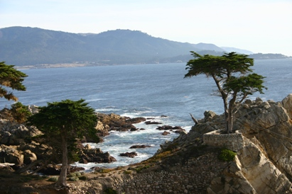 Pebble Beach Lone Cypress